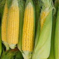 Sweetcorn Golden Bantam - 50 Seeds